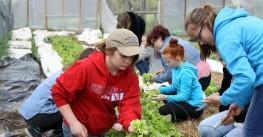 Farm Out 2016: Organic Farming Fun at its Finest